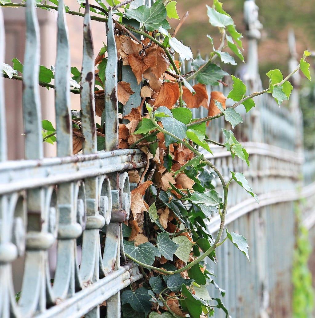 Quel type de clôture choisir pour fermer mon jardin ?